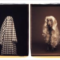 William Wegman Polaroids at Sperone Westwater, New York